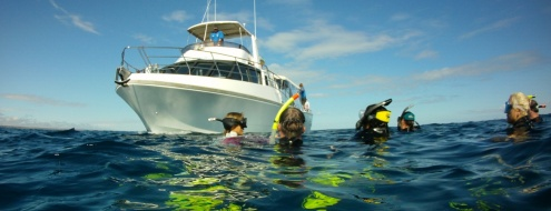 DAY DIVE TRIPS